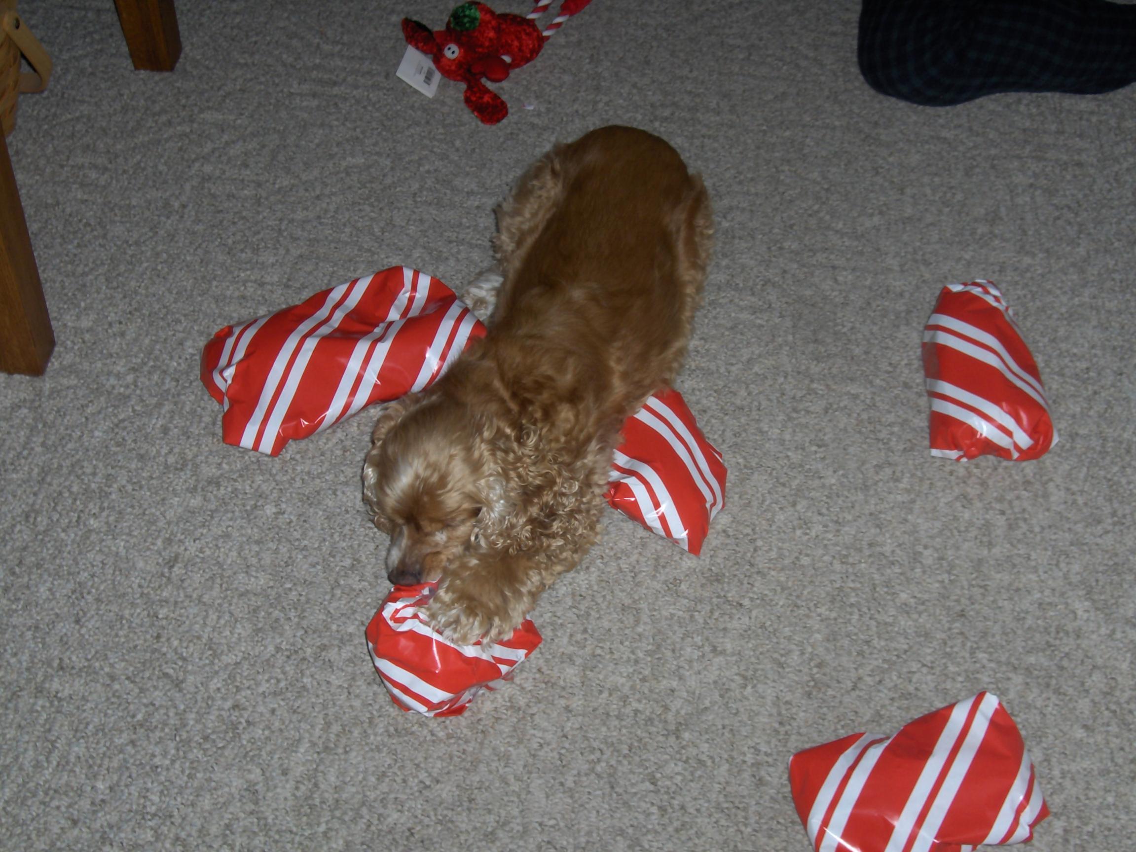 A dogs Christmas-003.jpg