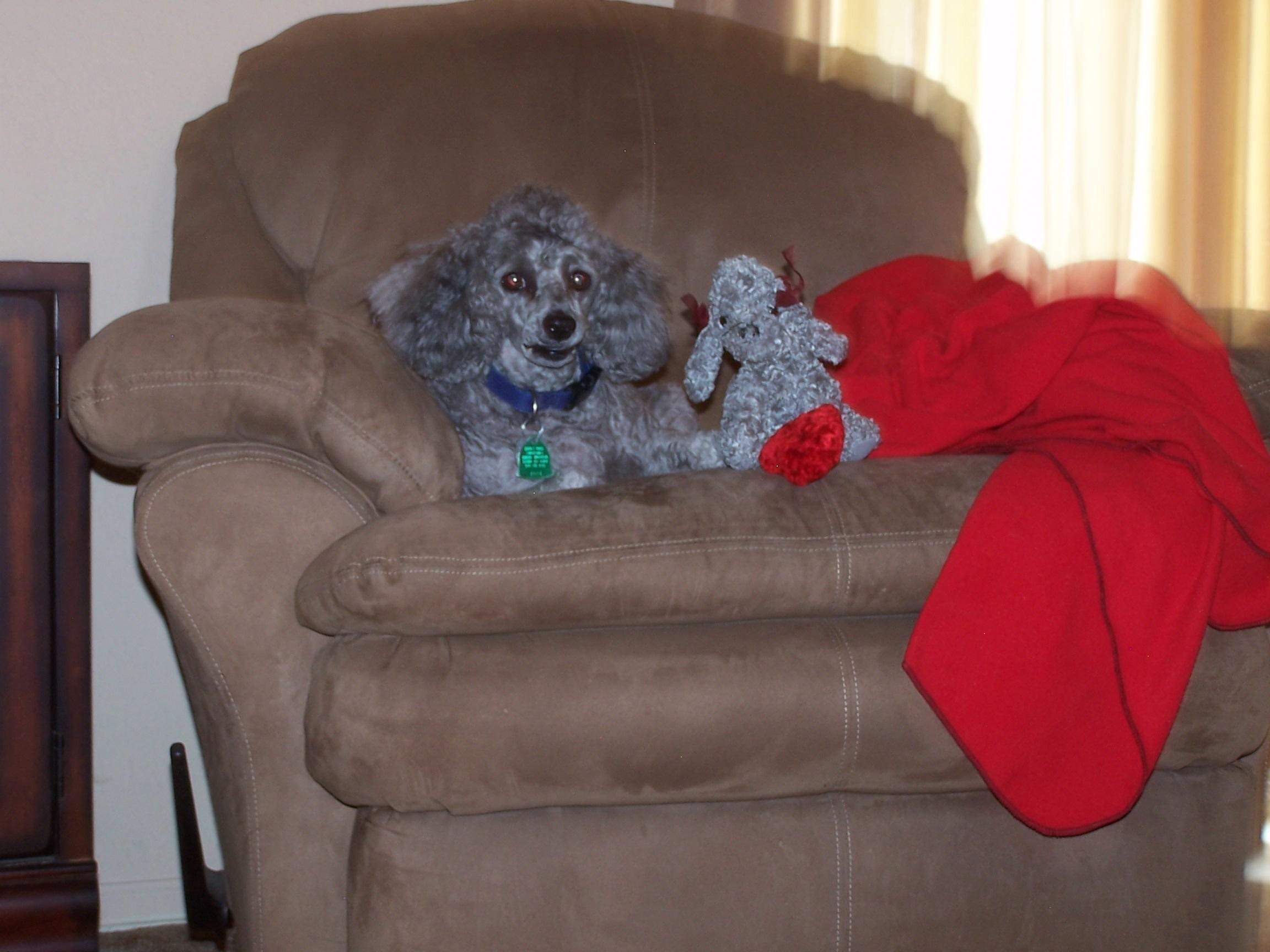 Critter pics / Pet Thread: Dial Up Beware-005.jpg