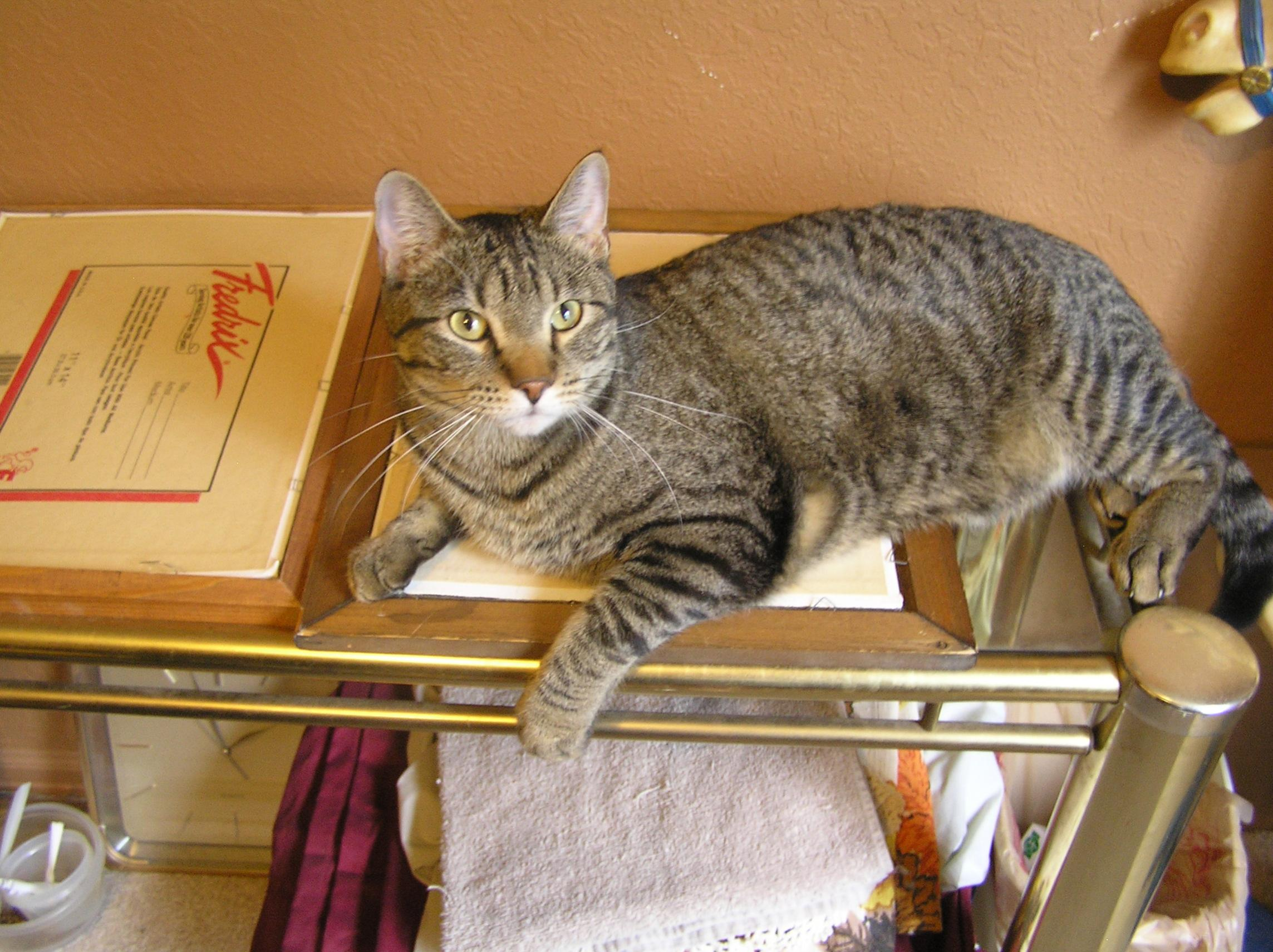 Critter pics / Pet Thread: Dial Up Beware-006.jpg
