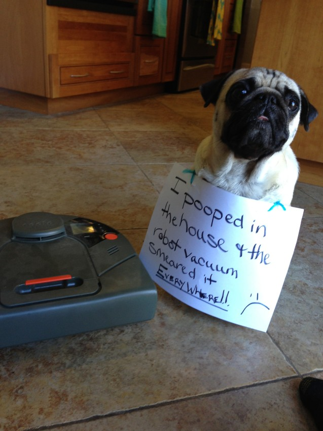 How About A Pet Picture Thread: Dogs, Cats, ...-006-robot-poopocalypse-2109776.jpg