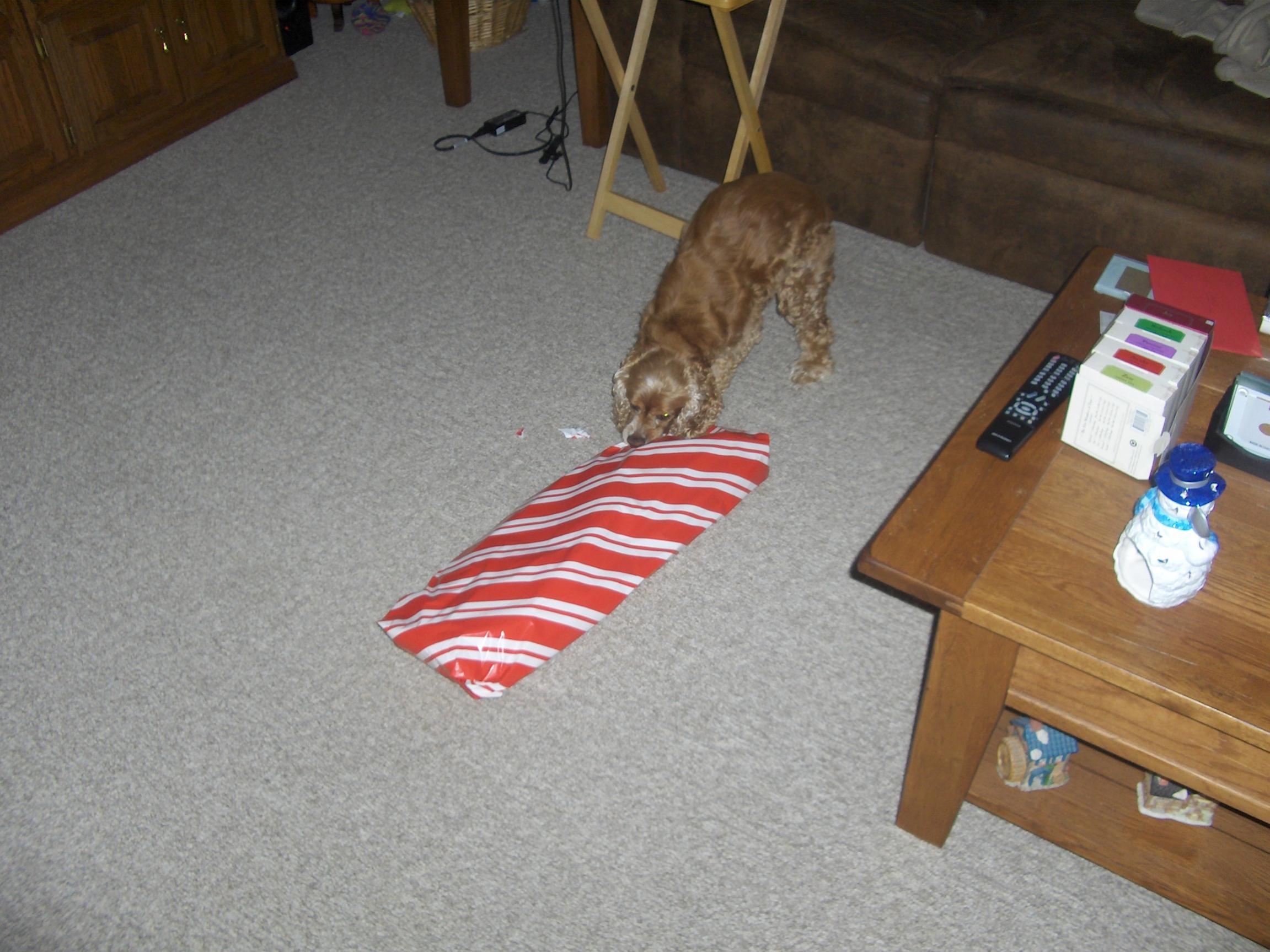 A dogs Christmas-009.jpg