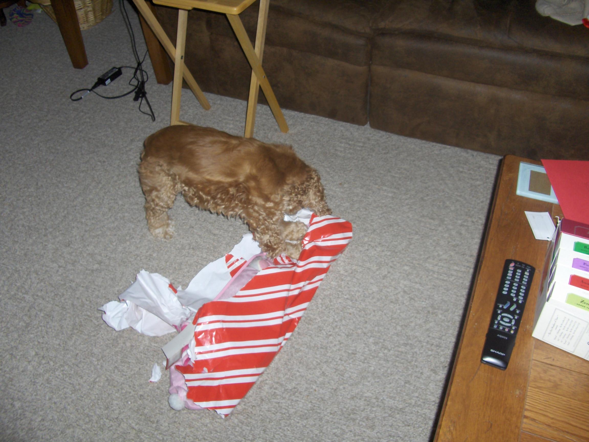 A dogs Christmas-012.jpg