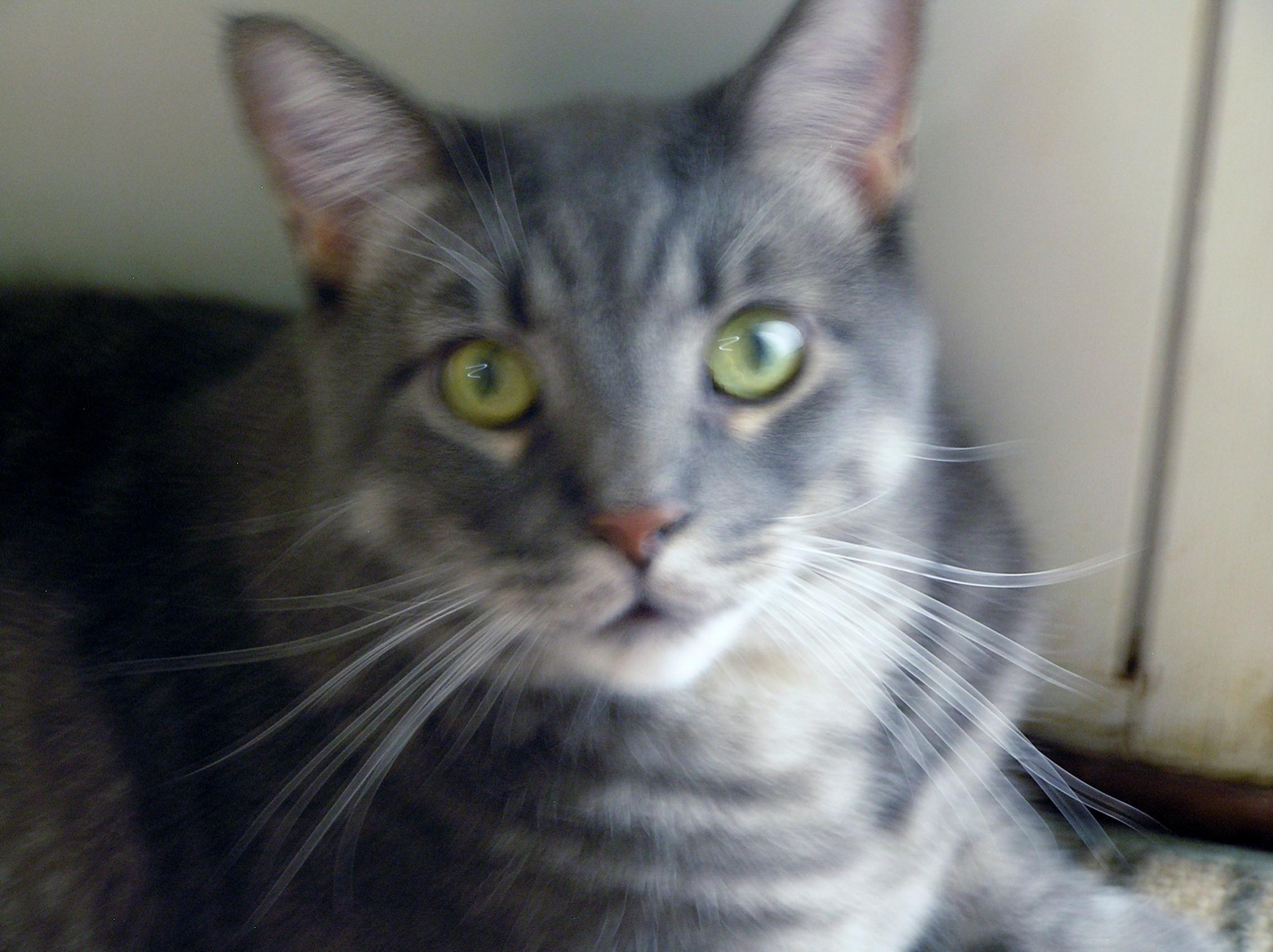 RIP Grumpy Cat-016.jpg
