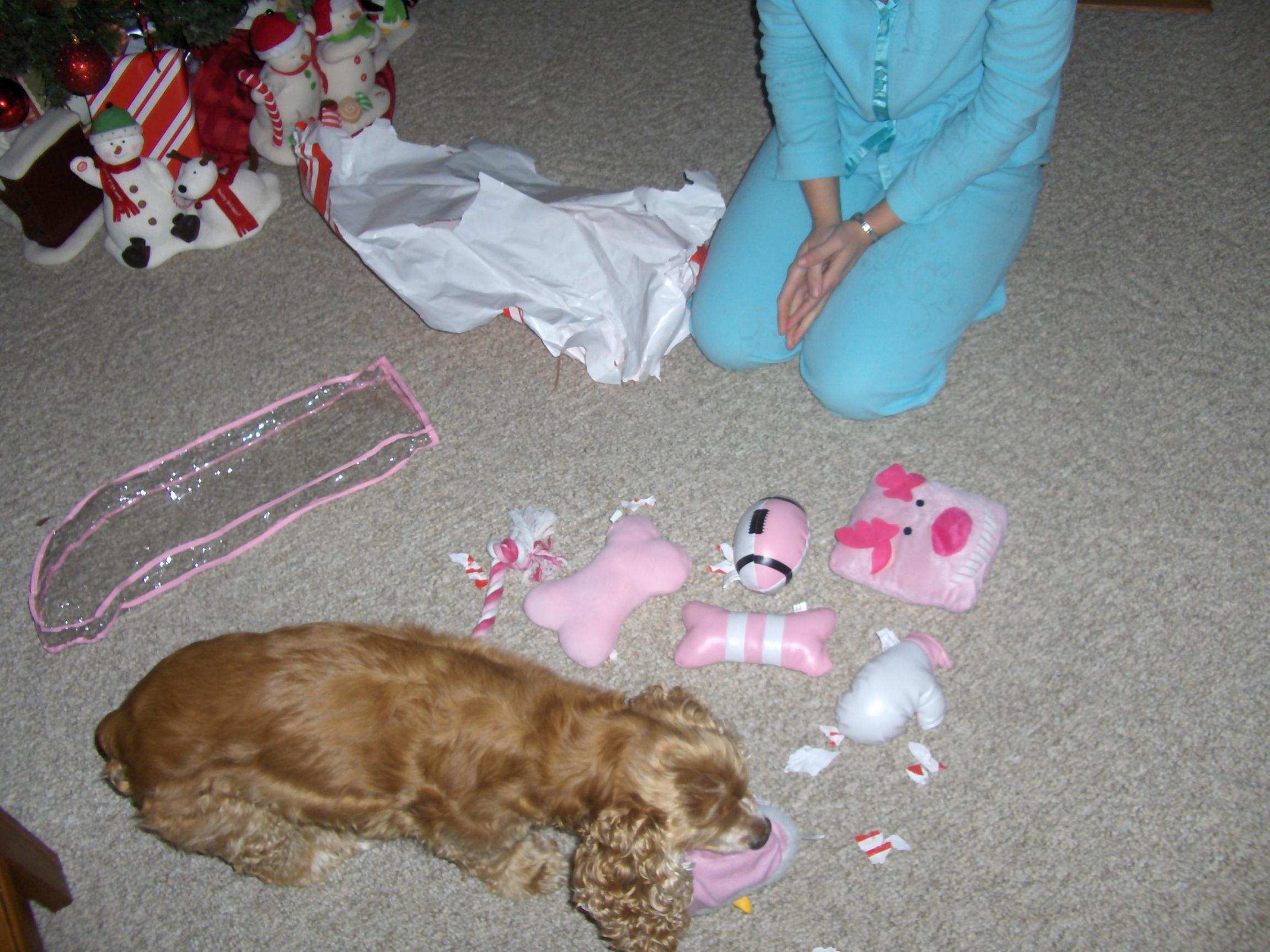 A dogs Christmas-018.jpg