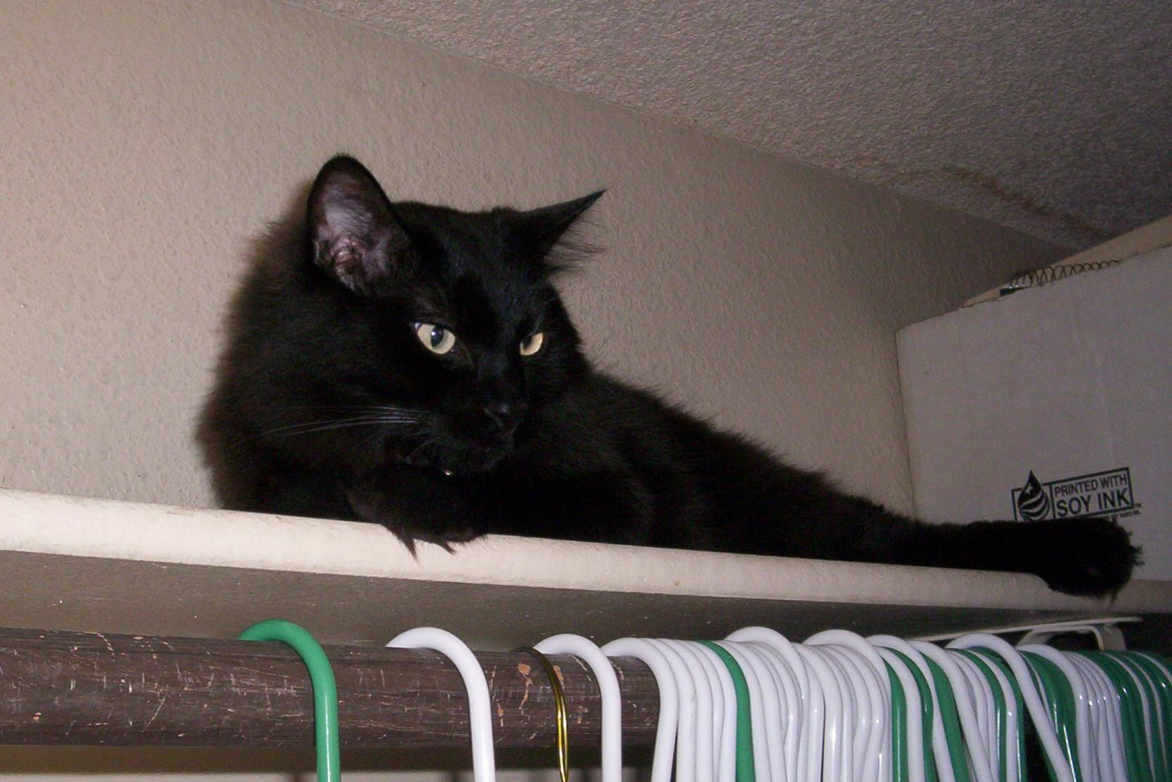 Let's see a picture of the cat that guards your house-100_0035.jpg