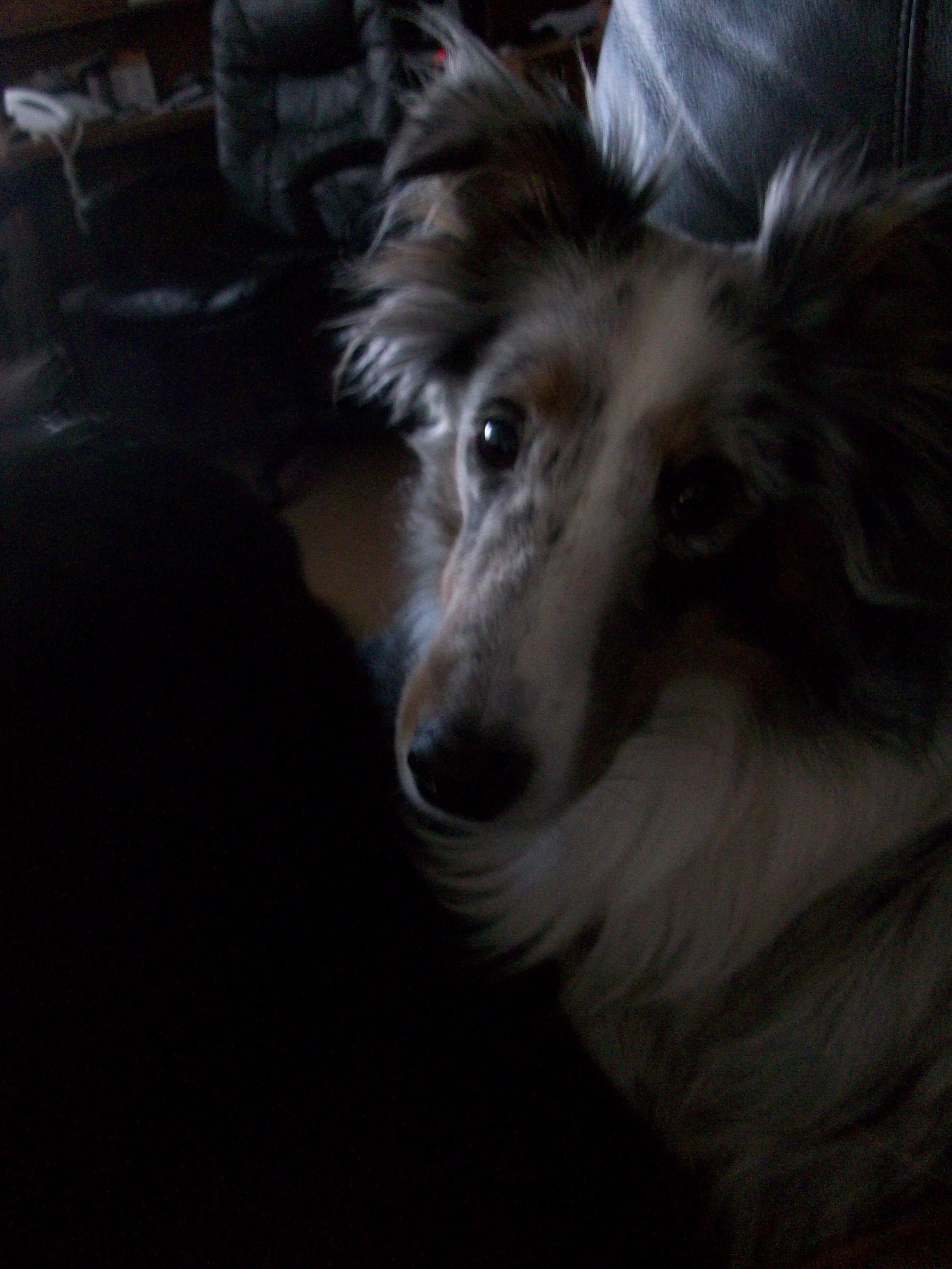 I LOVE my puppy!!!!-100_0256.jpg