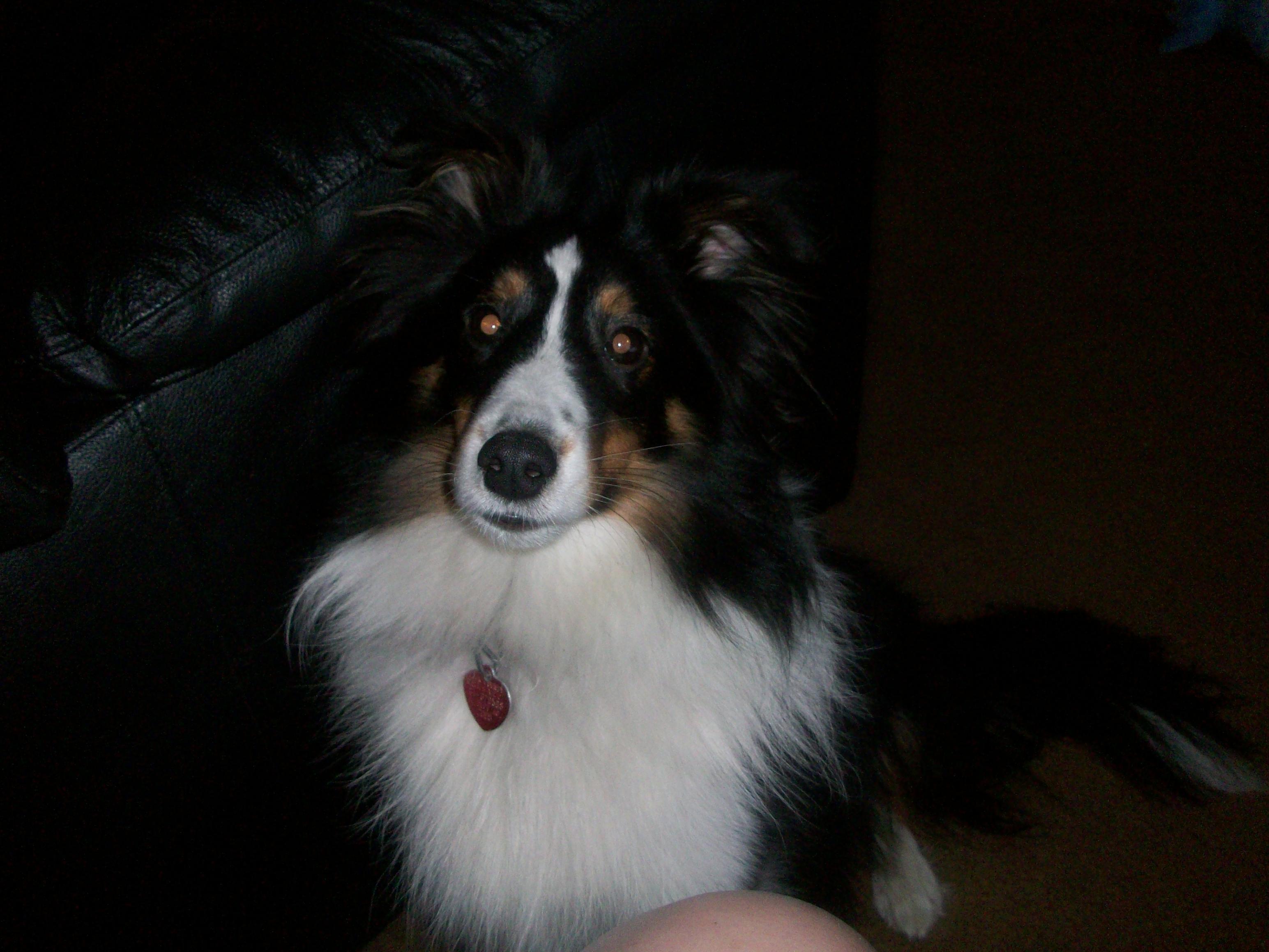 I LOVE my puppy!!!!-100_0267.jpg