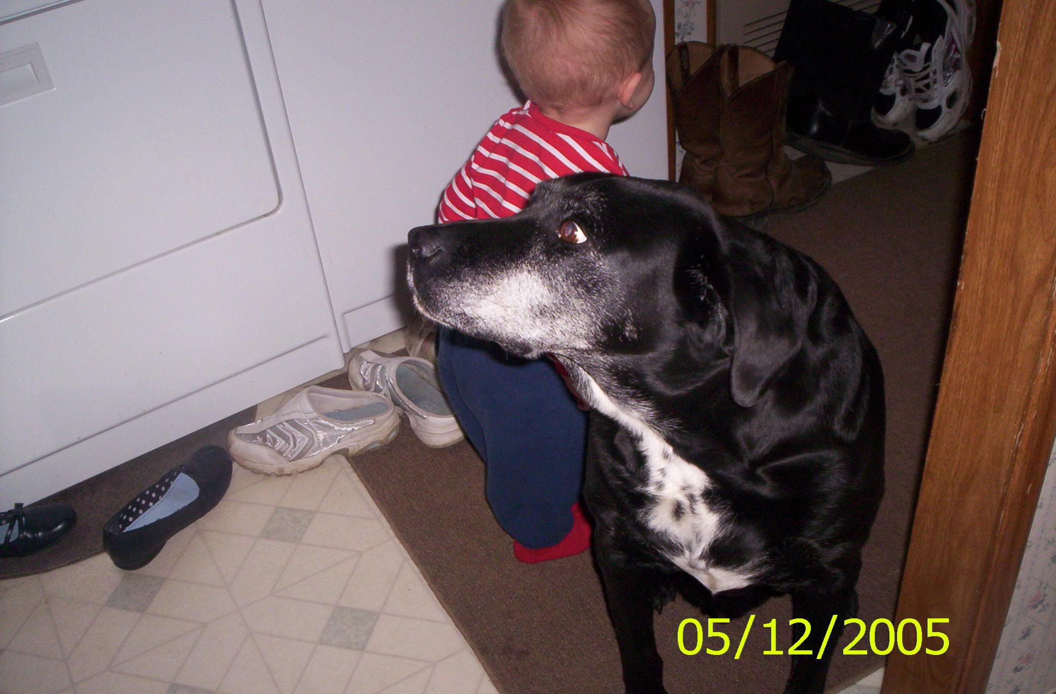 My 4-legged pal lost his battle with cancer - the quiet is deafening-100_0388.jpg