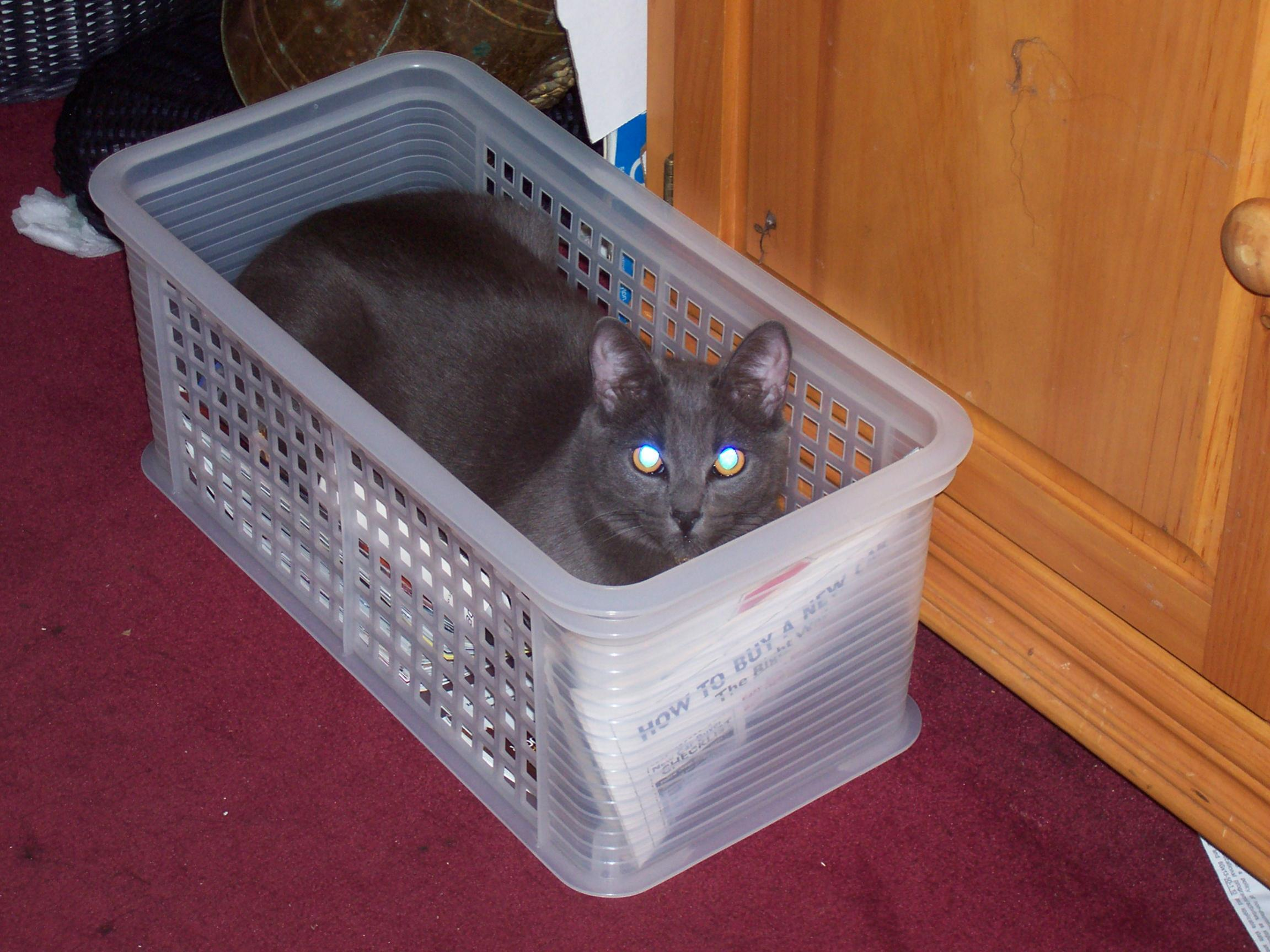 Let's see a picture of the cat that guards your house-100_0666.jpg