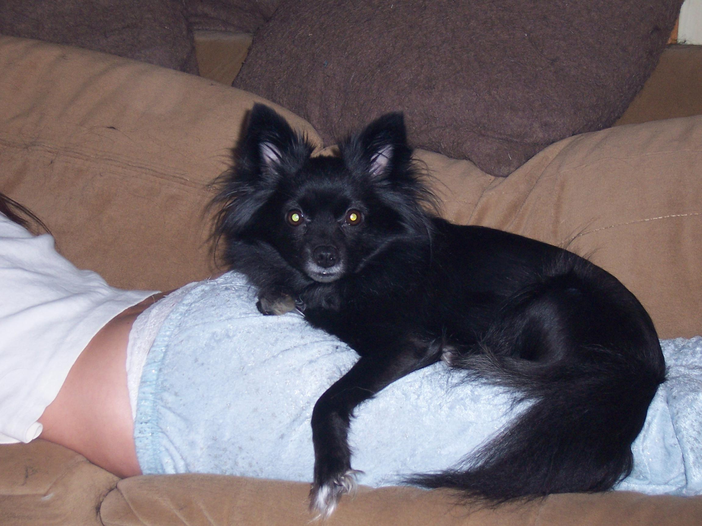 You think he'll make a good watch dog?-100_1434.jpg
