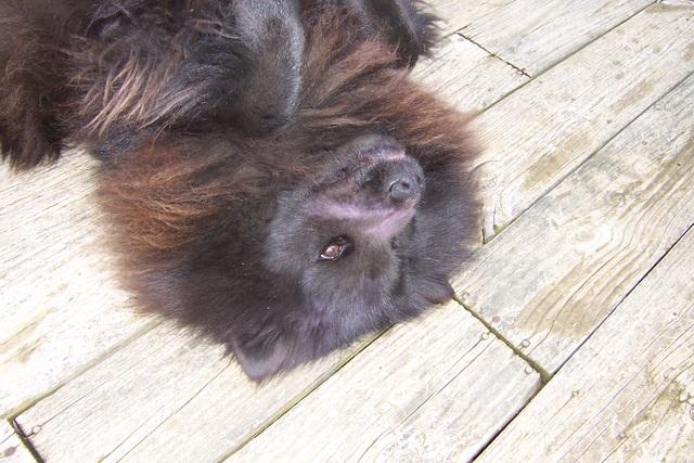 Critter pics / Pet Thread: Dial Up Beware-100_2830.jpg
