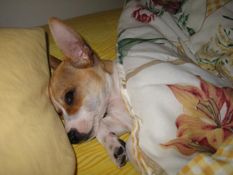 Critter pics / Pet Thread: Dial Up Beware-106-0673_img_small.jpg