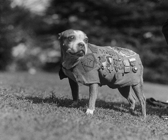 Sergeant Stubby, American war hero dog-11.jpg