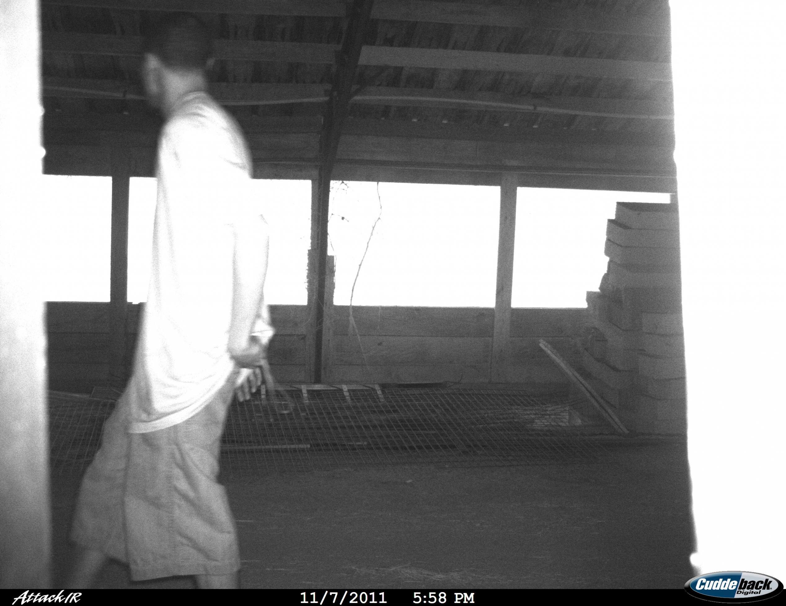 BG's in my barn !  Photo added!-110811014.jpg