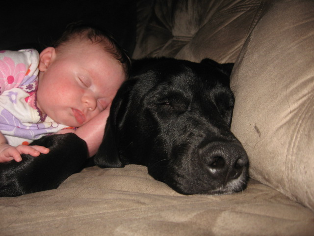 Labs love little girls-138.jpg