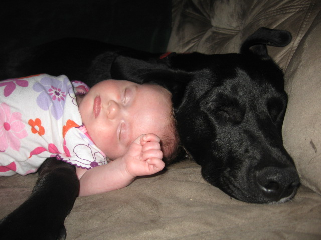 Labs love little girls-139.jpg