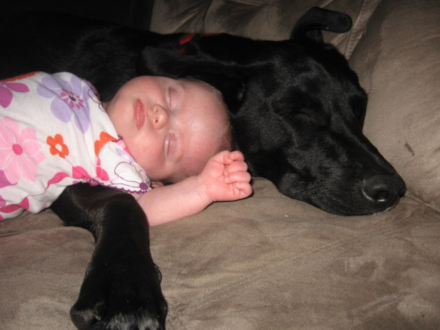 Labs love little girls-140.jpg