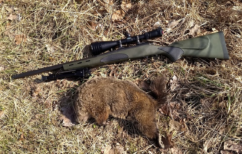 1st groundhog of the year-1a.jpg