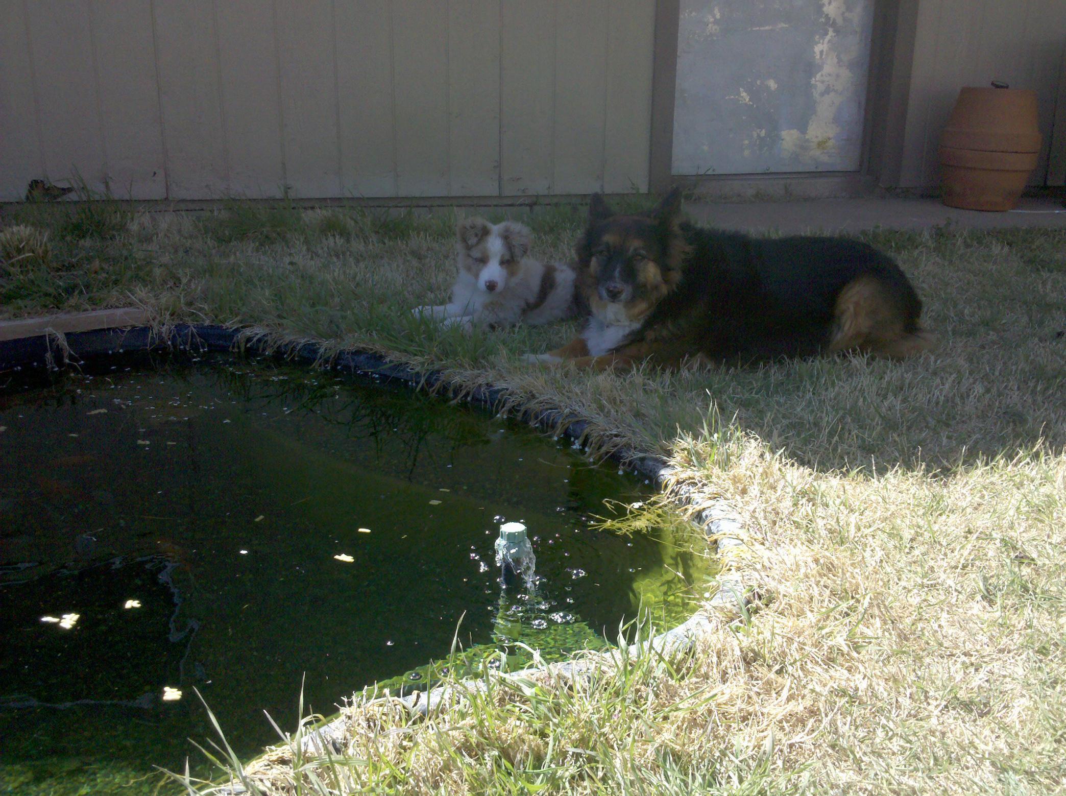 I LOVE my puppy!!!!-2010-04-05_15.08.03.jpg