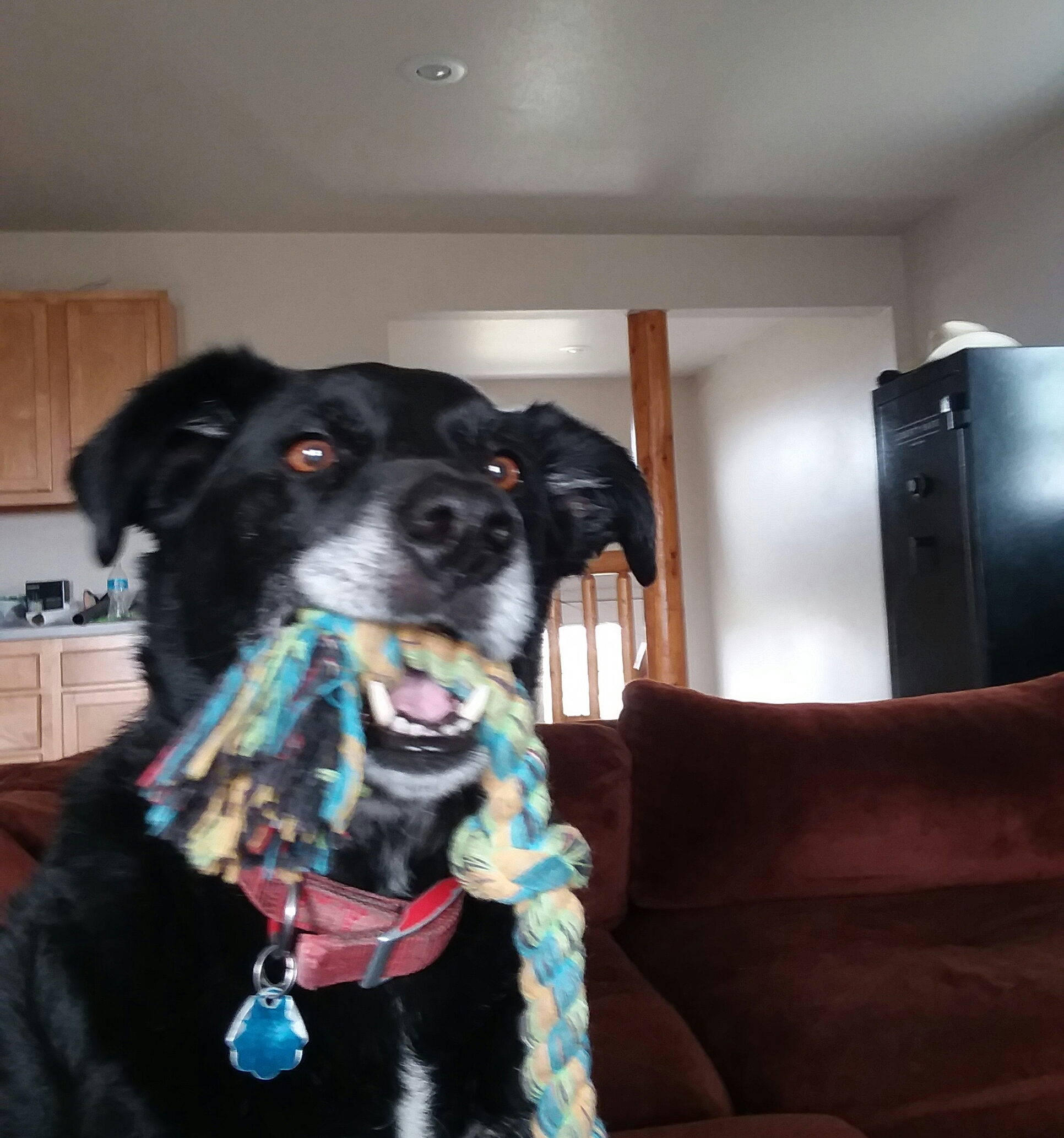 How About A Pet Picture Thread: Dogs, Cats, ...-20180919_212413.jpg
