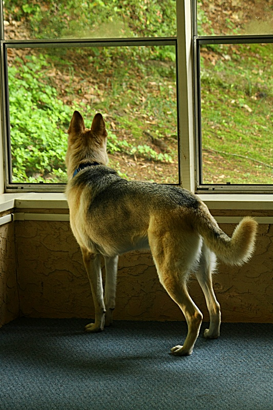 What kind of dog do you own? Are they a good watch/guard dog?-3095.jpg
