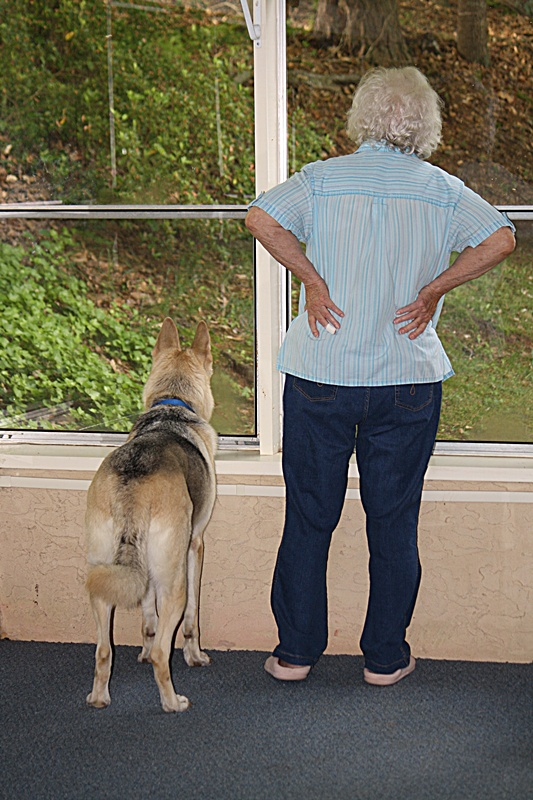 What kind of dog do you own? Are they a good watch/guard dog?-3096.jpg