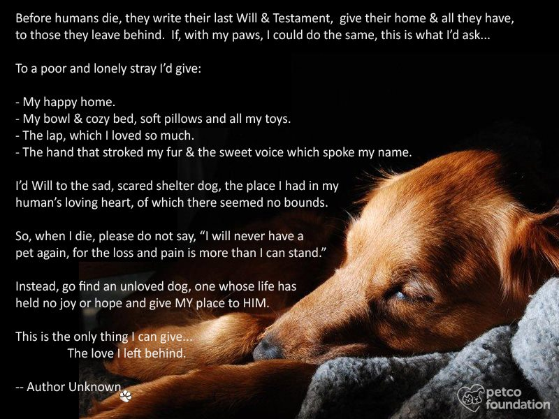 If a dog could write a last will and testament.......-4003.jpg