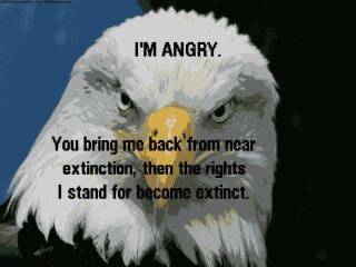 Gun Control-vs-2nd Amendment:  My Opinion-5360.jpg