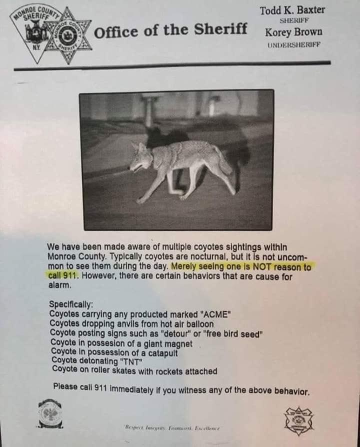 Coyotes are dangerous!-69935637_10217964735764287_5524714306559541248_n.jpg