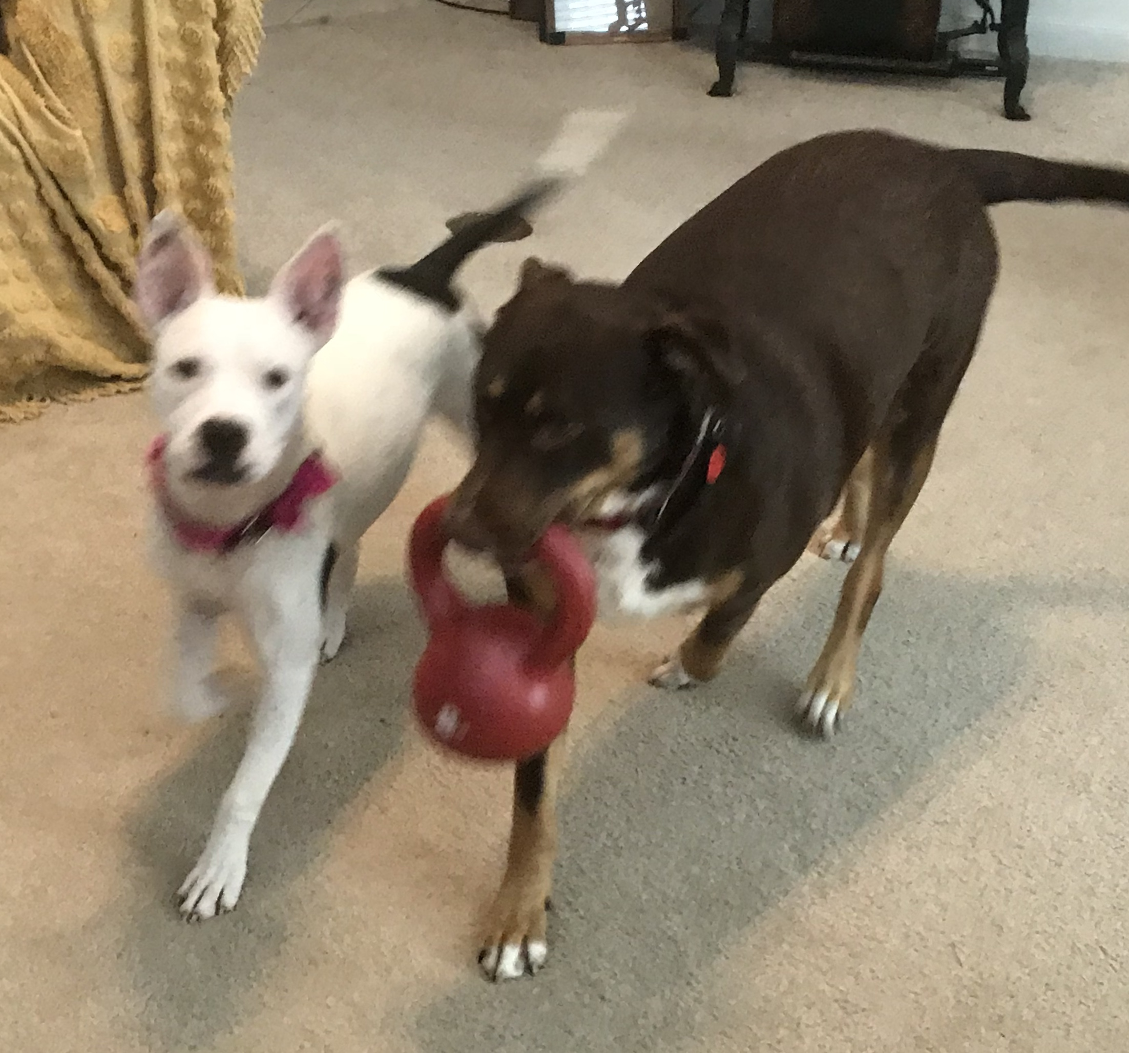 How About A Pet Picture Thread: Dogs, Cats, ...-6bd61504-b5d8-46d1-bb0f-bc08b796472a.jpeg