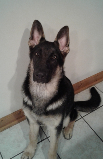 How About A Pet Picture Thread: Dogs, Cats, ...-6months.jpg