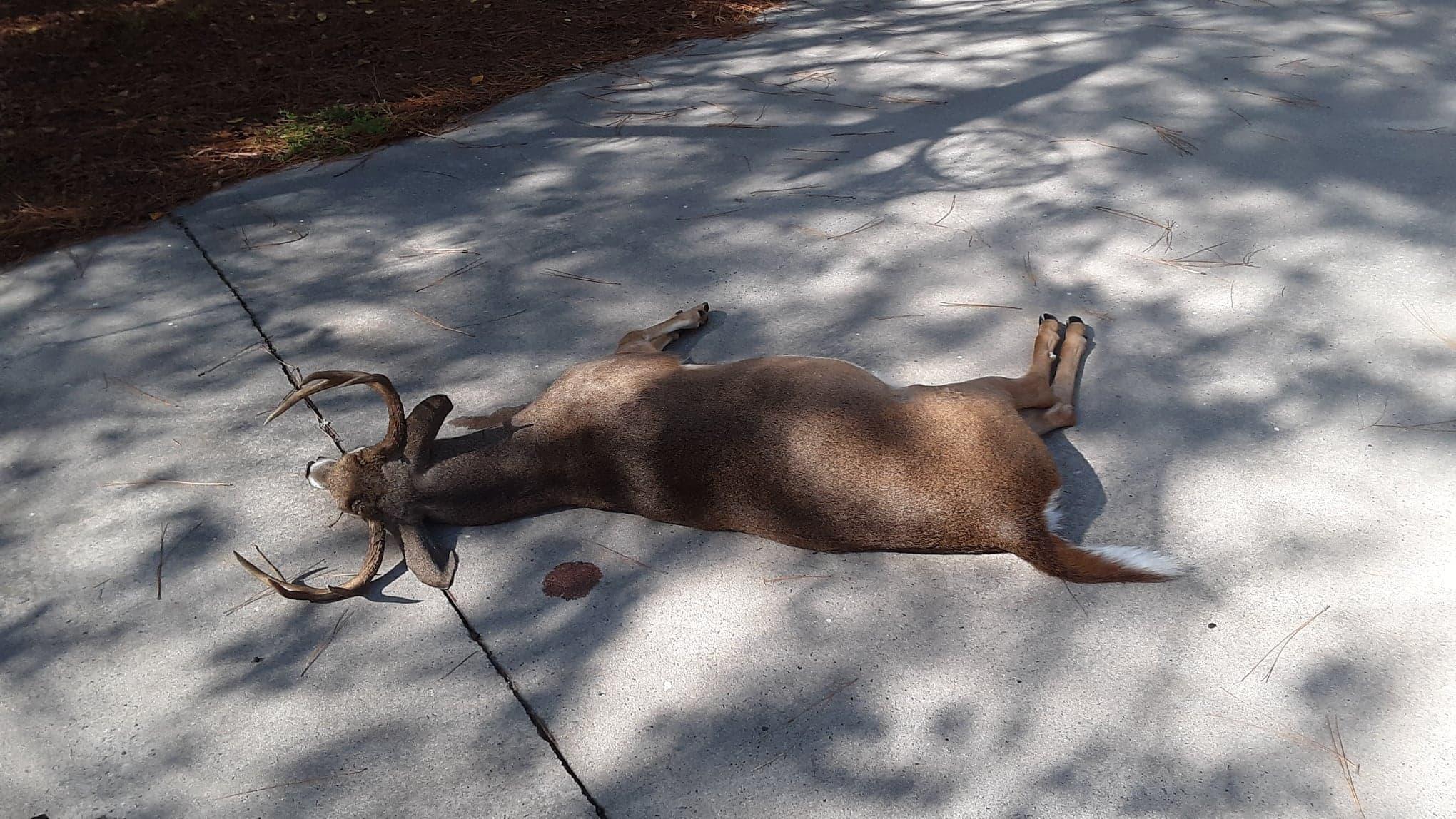 .300 AAC Blackout deer down-74605510_1776939479116512_4518853538729689088_n.jpg