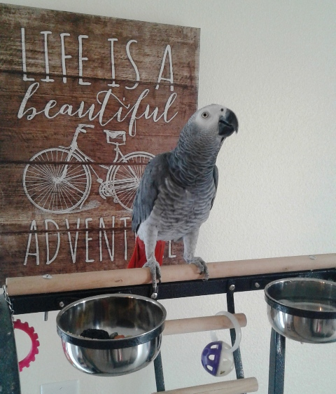 How About A Pet Picture Thread: Dogs, Cats, ...-africangrey.jpg