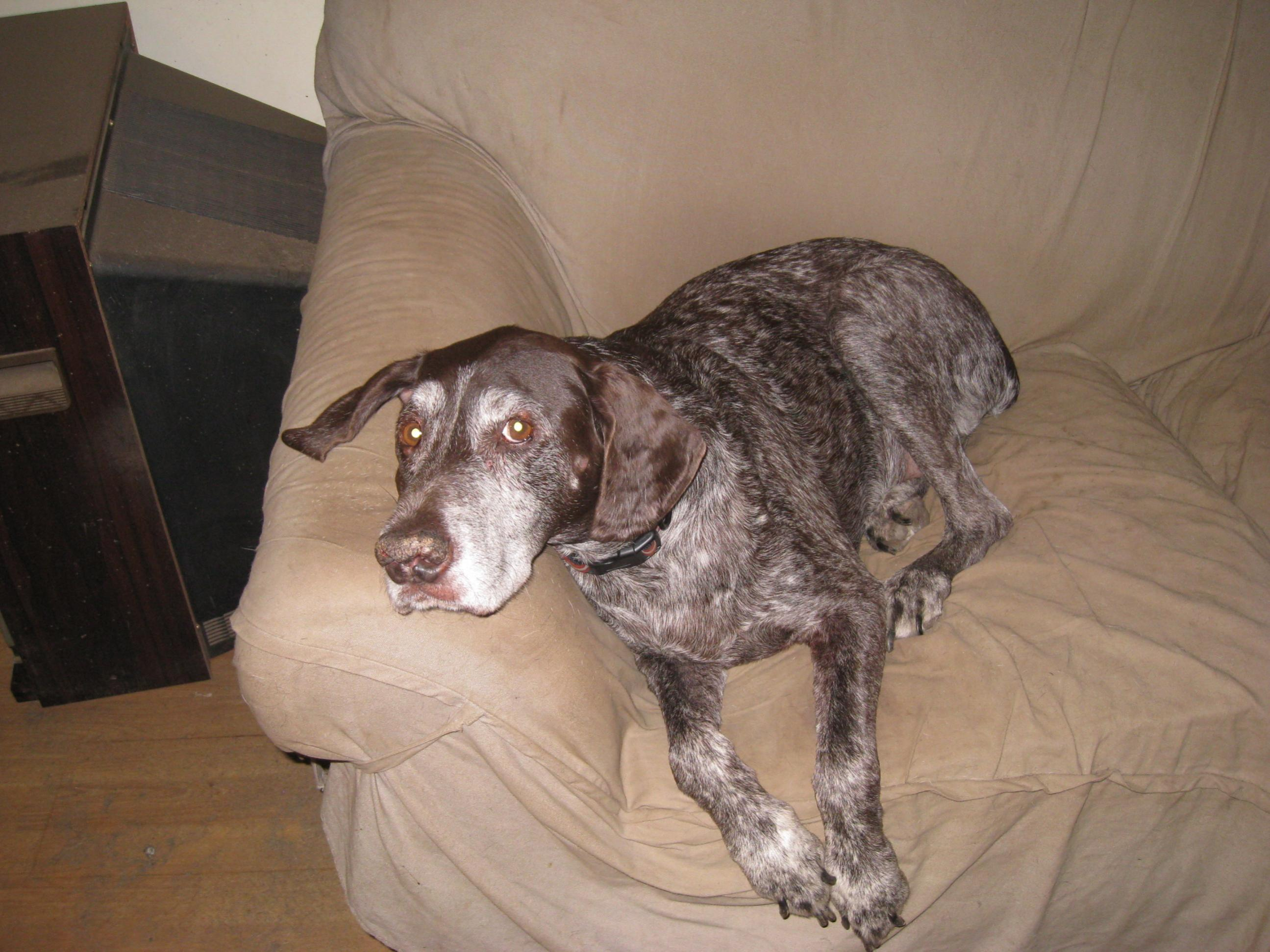 I may need to play the Rainbow Bridge; UPDATE, Gus is feeling better!-all-pics-302.jpg