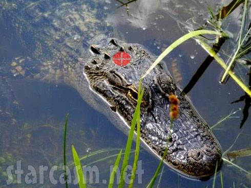 Name:  alligator_quarter-sized-kill-spot.jpg Views: 27 Size:  56.4 KB