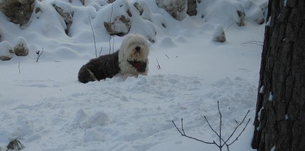 Snowstorm!-baasel.jpg