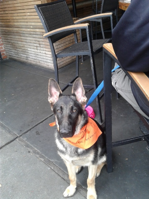 How About A Pet Picture Thread: Dogs, Cats, ...-bandana.jpeg