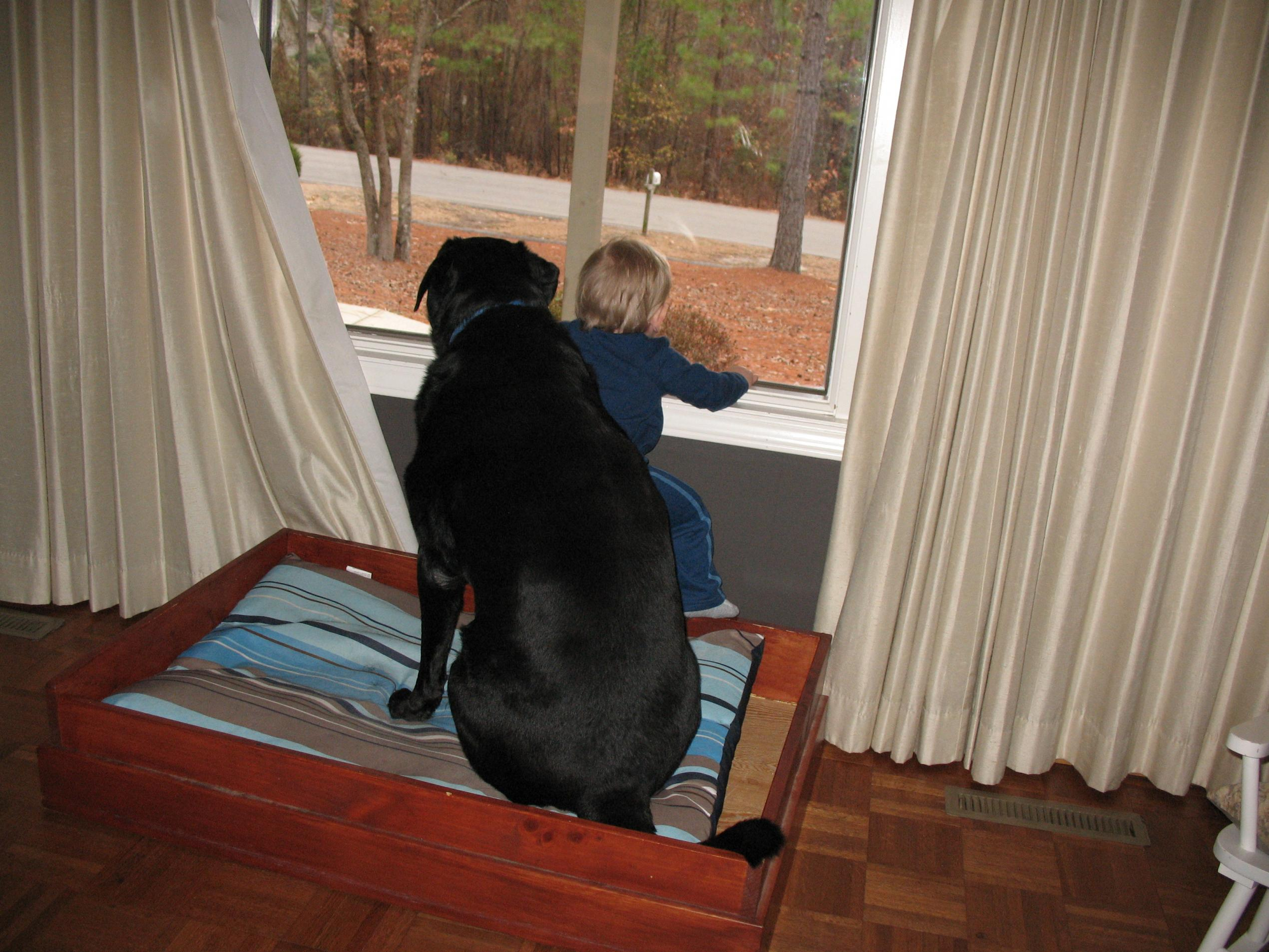 What kind of dog do you own? Are they a good watch/guard dog?-baron-jm-guard.jpg