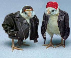 Hot chicks...-bikerchicks.jpg
