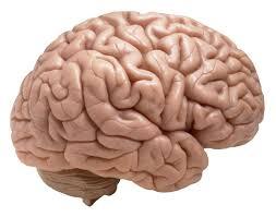 Name:  brain.jpg Views: 58 Size:  6.7 KB