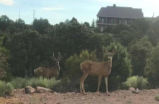 Four bucks and a doe this morning!-buck-doe.jpg