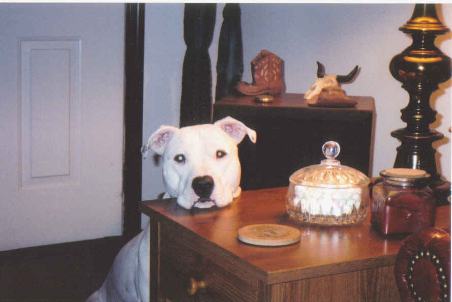 How About A Pet Picture Thread: Dogs, Cats, ...-buffy-waiting-candy.jpg