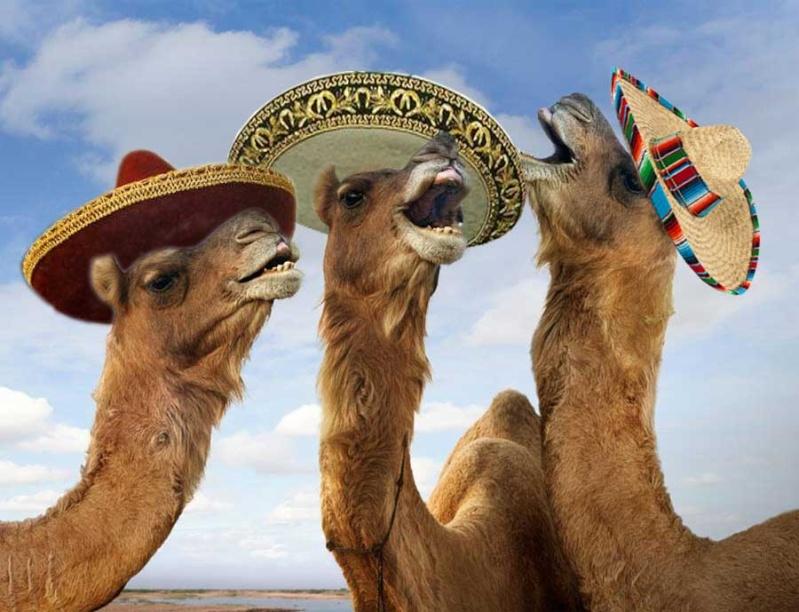 Autism and Camel Milk-camel_11.jpg