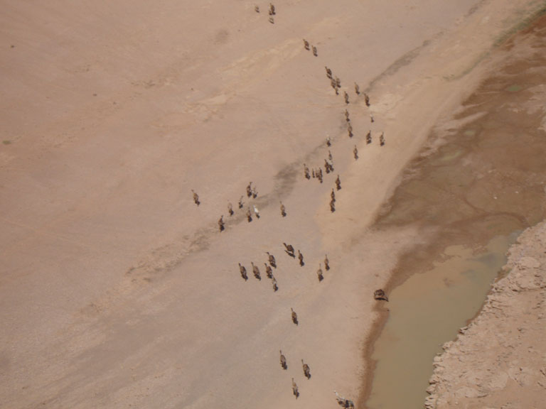 Pictures from abroad!(and elsewhere, Dial up beware)-camels.jpg