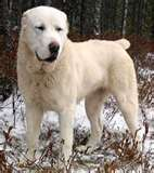 Walking dog early in the AM and a car stops at your driveway.-cao.jpg