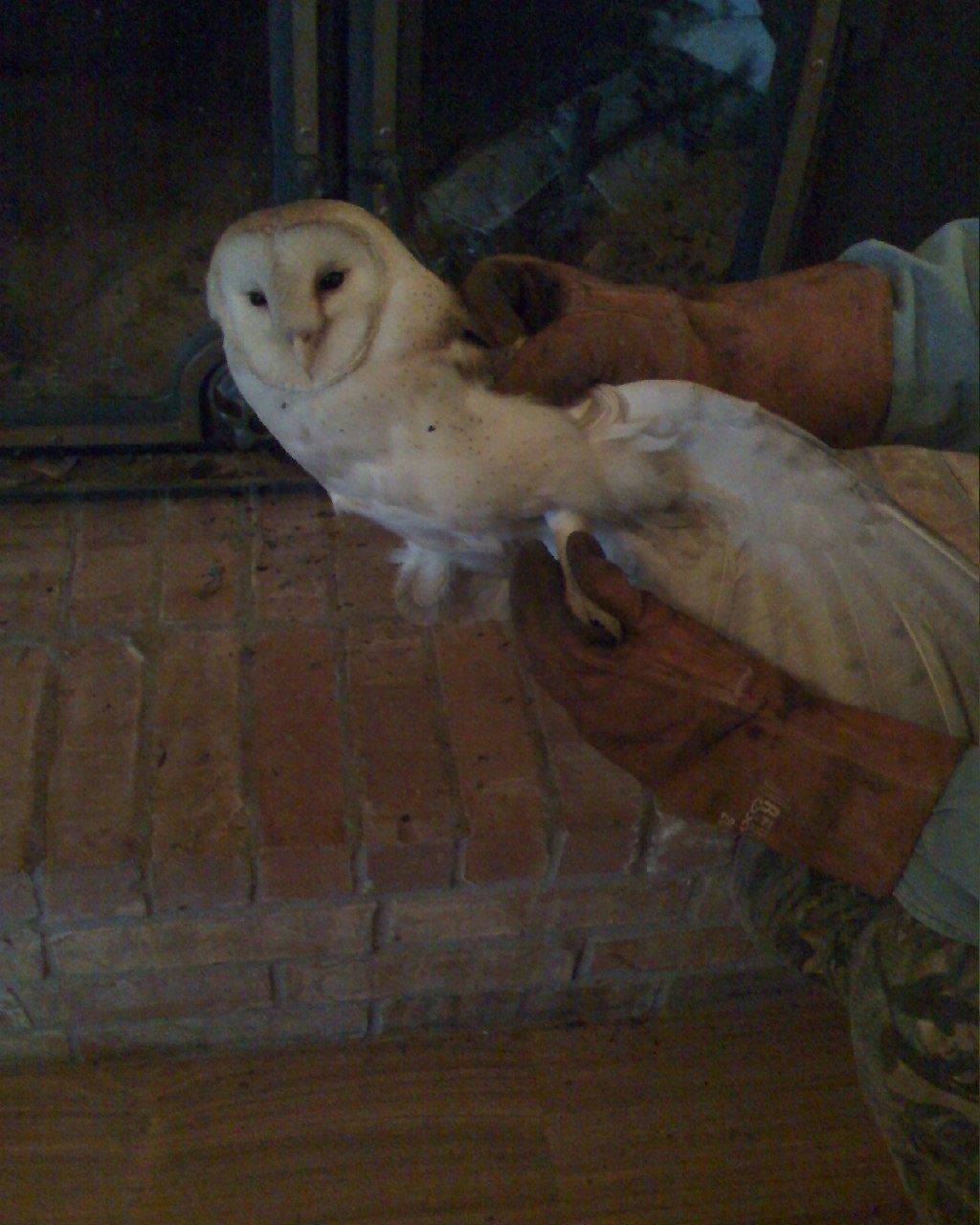 Varmint in my fireplace **Pics Added Today**-captured-owl.jpg