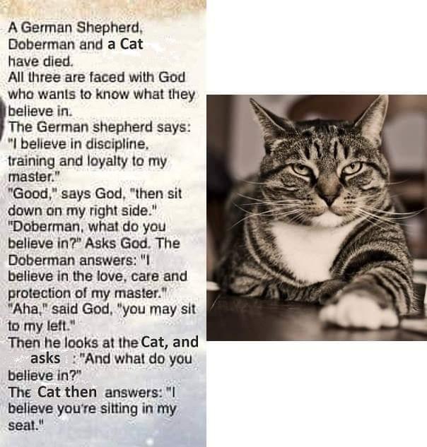 Random Thoughts (Part2)-cat-2-doga.jpg