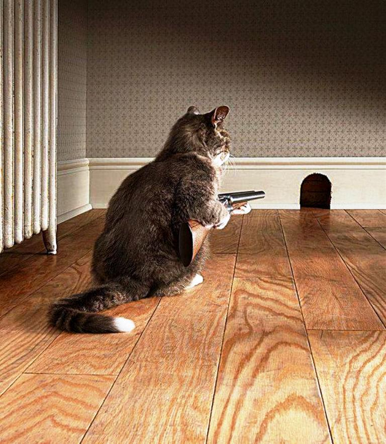 Wife confronts intruder...actually kinda funny.-cat-mouse.jpg
