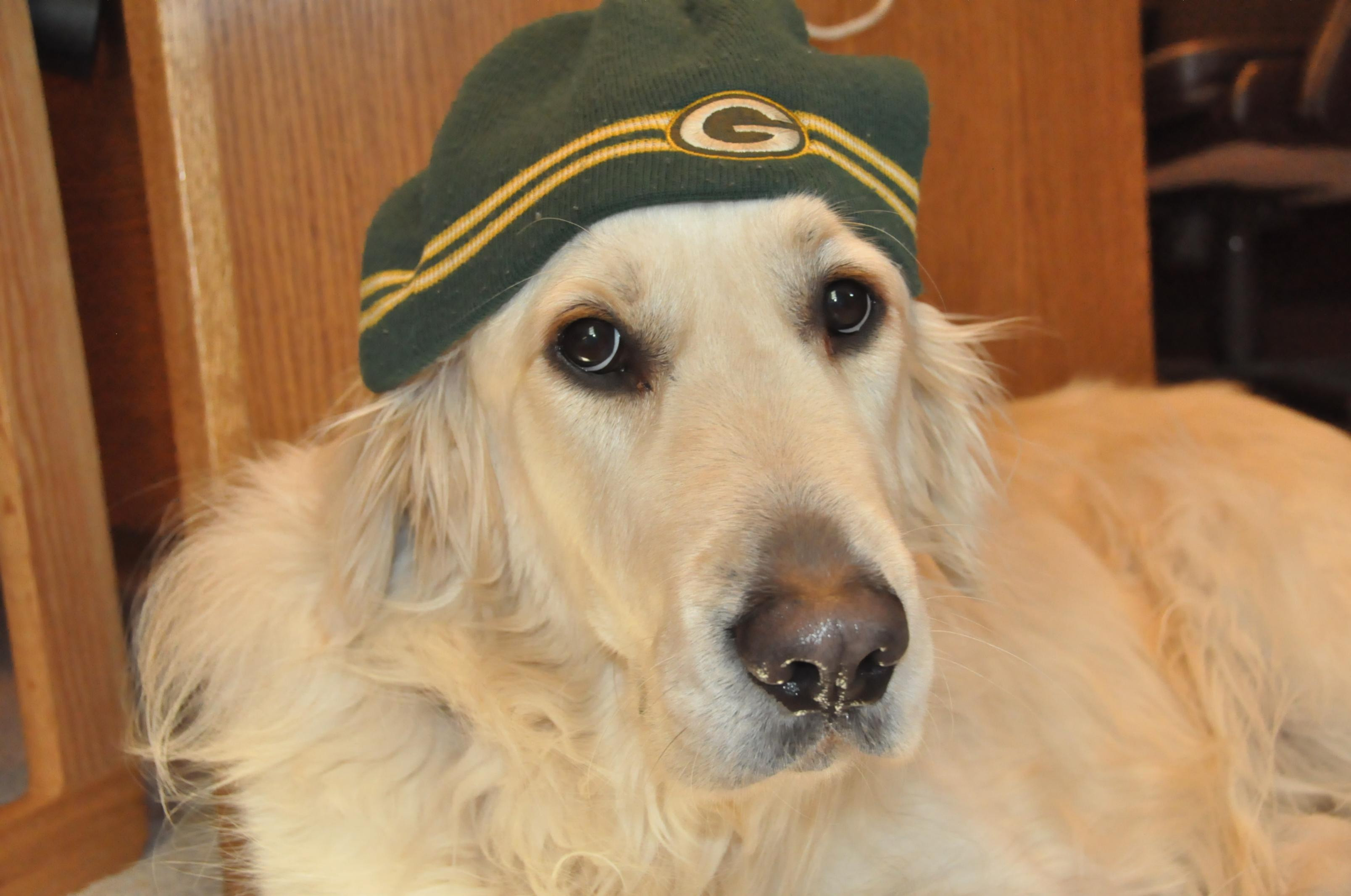 What kind of dog do you own? Are they a good watch/guard dog?-chase-gb-hat-.jpg