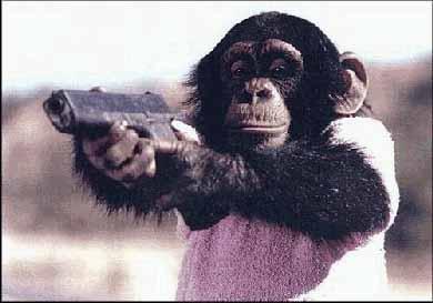 The most dangerous chimpanzee on record.-chimp-glock.jpg